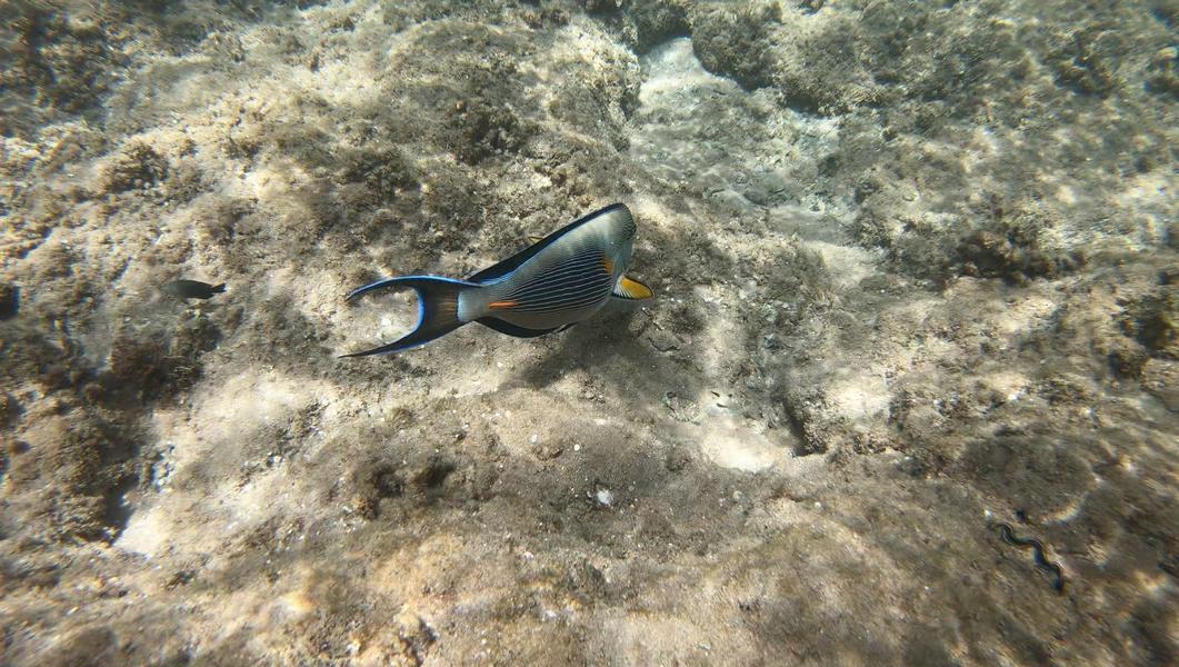 Rollei 530 Unterwasserfototest Bild 1